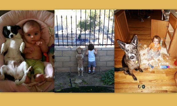 Όταν τα σκυλάκια κάνουν τα πάντα για χάρη του παιδιού! (εικόνες)