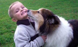 Ποιες ράτσες σκύλων είναι ιδανικές για συμβίωση με παιδιά;
