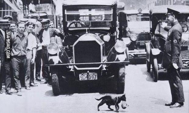 Νέα Υόρκη 1925: Όταν ένας τροχονόμος σταμάτησε την κυκλοφορία για να περάσει μία μαμά γάτα με το γατάκι της