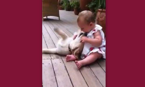 Το πιο γλυκό βίντεο: Ένα γκόλντεν ριτρίβερ κάνει χαρές σε ένα μωρό 8 μηνών!