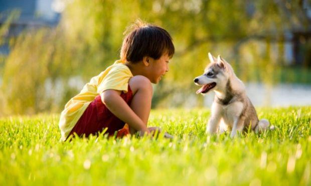 Παιδιά και ζώα! Βασικοί κανόνες για μια ομαλή και όμορφη συνύπαρξη!