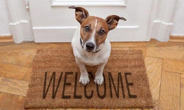 Οι σκύλοι νιώθουν ό,τι νιώθουμε και εμείς!