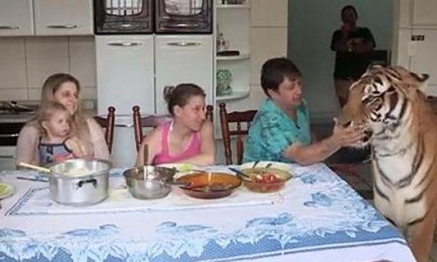 Ολόκληρη οικογένεια ζει με 7 τίγρεις στο σπίτι! (βίντεο)