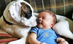 Τι κάνουν τα μωρά όταν στο σπίτι υπάρχουν σκυλάκια; Δείτε το βίντεο!