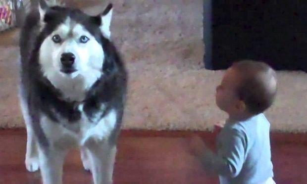 Δείτε πώς μιμείται ένας σκύλος ένα μωρό! (βίντεο)