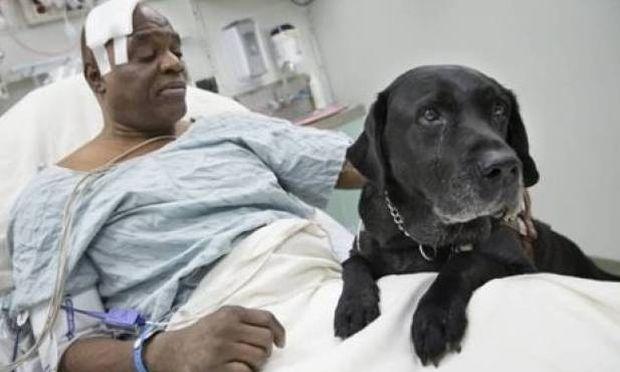 Σκύλος βούτηξε στις γραμμές του τρένου για να σώσει το αφεντικό του