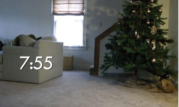 Επ! Ποιος χαλάει το Χριστουγεννιάτικο δέντρο; (βίντεο)
