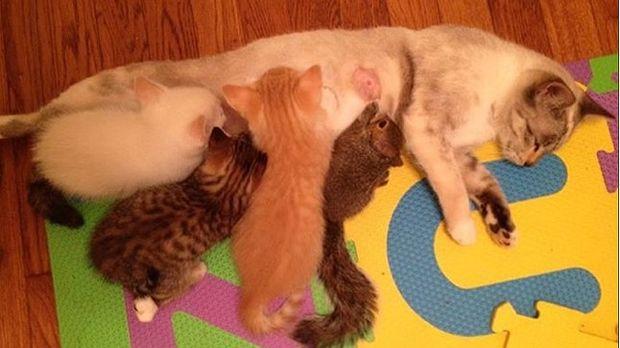 Η απίστευτη ιστορία μαμάς γάτας που υιοθέτησε δύο… (φωτογραφίες)