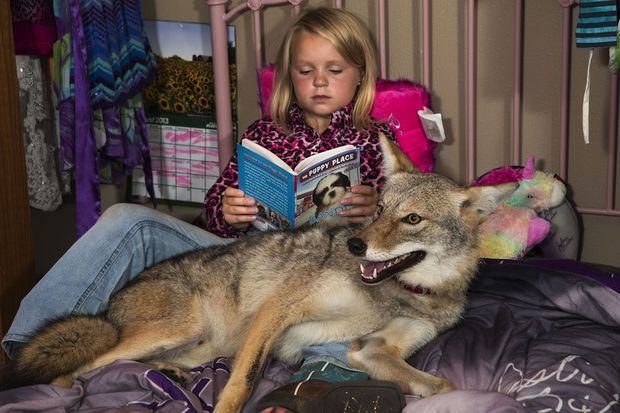 Το 8χρονο κορίτσι και το κογιότ έγιναν οι καλύτεροι φίλοι! (φωτογραφίες)