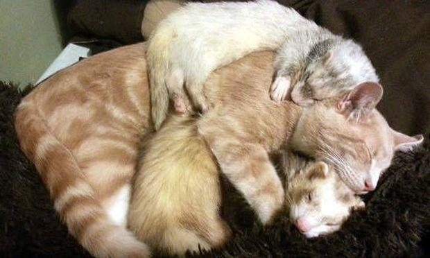 Η γάτα και οι νυφίτσες- Μια μοναδική χαριτωμένη παρέα (εικόνες)