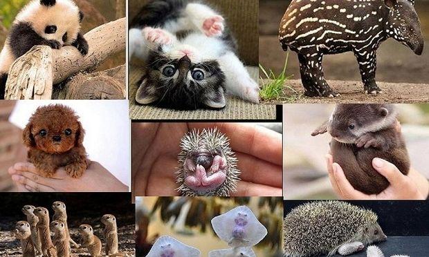 Αυτά τα νεογέννητα ζωάκια, μας έχουν κλέψει την καρδιά! (εικόνες)