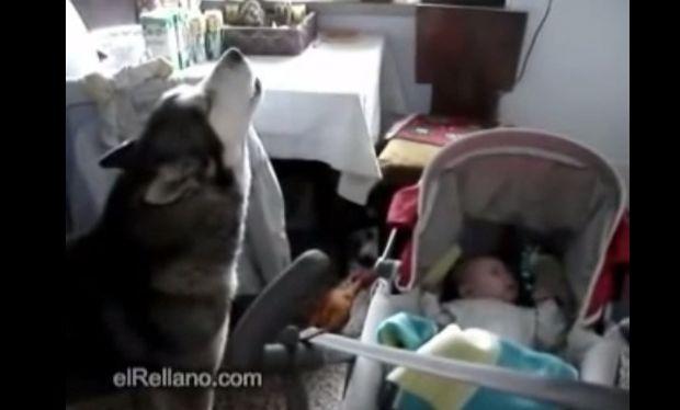 Το χάσκι που τραγουδάει στο μωρό για να σταματήσει να κλαίει! Δείτε το απολαυστικό βίντεο