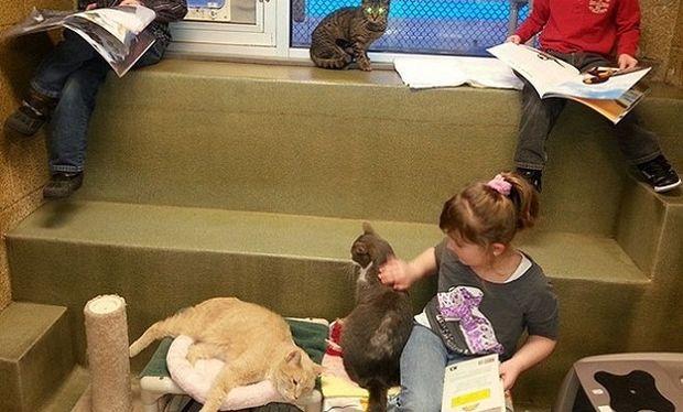 Παιδιά με χαμηλή βαθμολογία στο σχολείο διαβάζουν παραμύθια σε… γάτες! (εικόνες)
