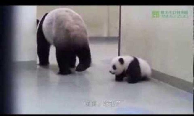 Η απίστευτη αντίδραση ενός μωρού πάντα, όταν η μαμά του προσπαθεί να το βάλει για ύπνο! (βίντεο)