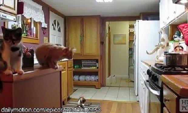 Όταν οι γάτες… «τρώνε» τα μούτρα τους! (βίντεο)