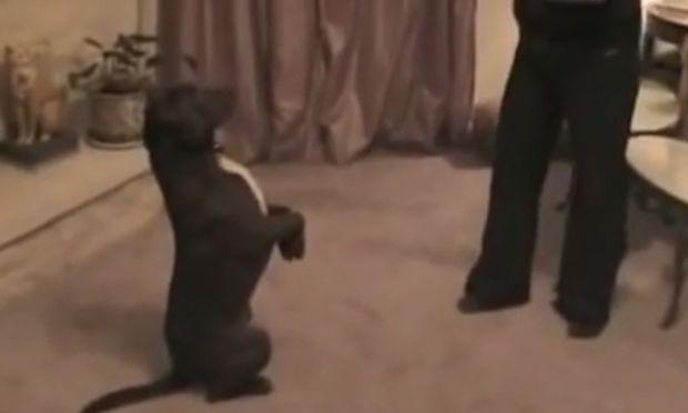 Μια μοναδική αγάπη! Ο σκύλος και ο άντρας που έσωσαν ο ένας την ζωή του άλλου (βίντεο)