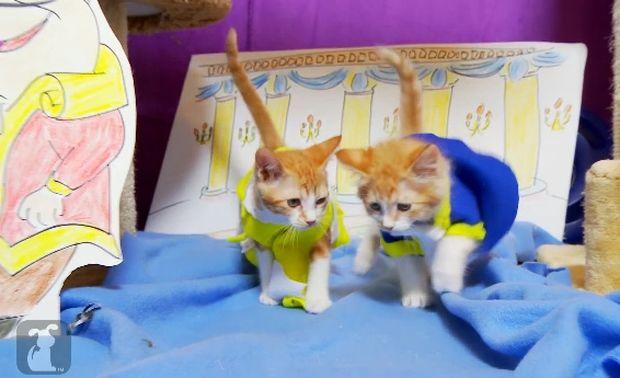 Η Πεντάμορφη και το Τέρας με πρωταγωνιστές χαριτωμένες γατούλες! (βίντεο)