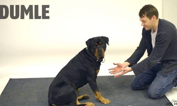 Πώς αντιδρούν οι σκύλοι στα μαγικά κόλπα; Ενα ξεκαρδιστικό βίντεο!