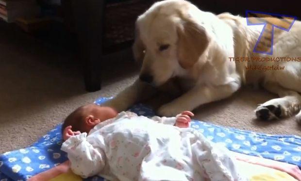 Κατοικίδια! Οι αποφασισμένοι προστάτες των μωρών! (βίντεο)
