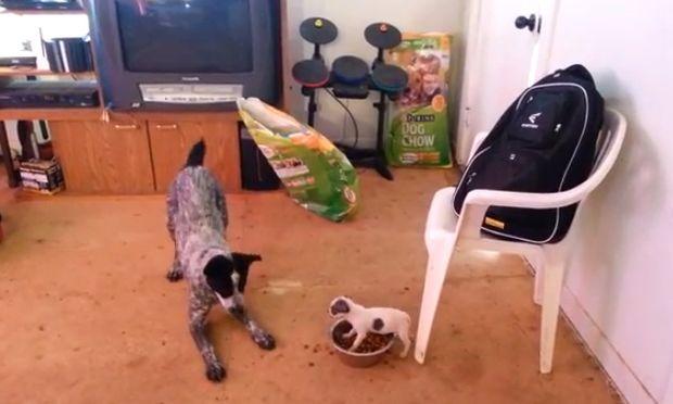 Ποιο από τα δυο σκυλιά κάνει κουμάντο; Πάντως όχι αυτό που νομίζετε! (βίντεο)