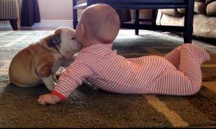 Μοναδικό! Το μωρό δέχεται «επίθεση» φιλιών από κουταβάκι (βίντεο)