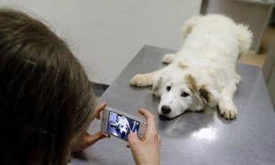 H ιστορία της 13χρονης που σώζει τα αδέσποτα σκυλιά στην Ρουμανία μέσω facebook