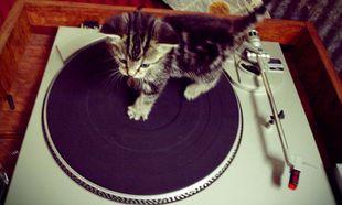 Τι γίνεται όταν γατάκια έρχονται αντιμέτωπα με ένα πικάπ! Απολαύστε τα βίντεο