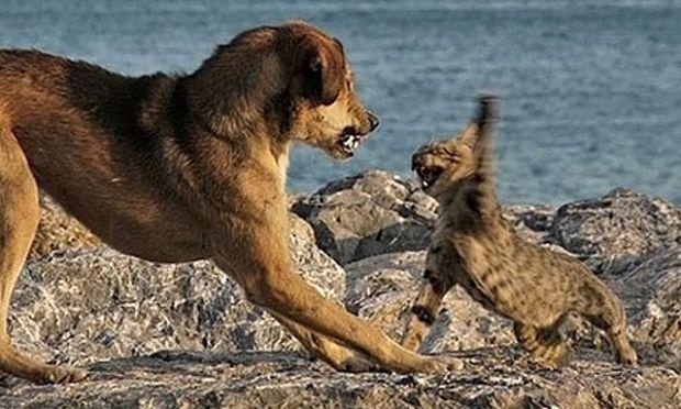 Γάτα ήρωας σώζει αγοράκι από επίθεση σκύλου (βίντεο)