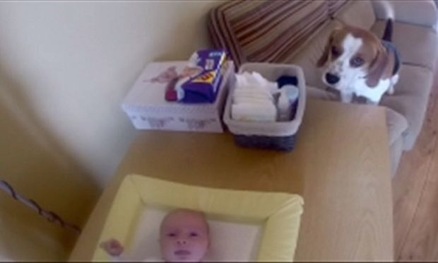 Αυτός ο σκύλος…αλλάζει πάνα στο μωρό! (βίντεο)
