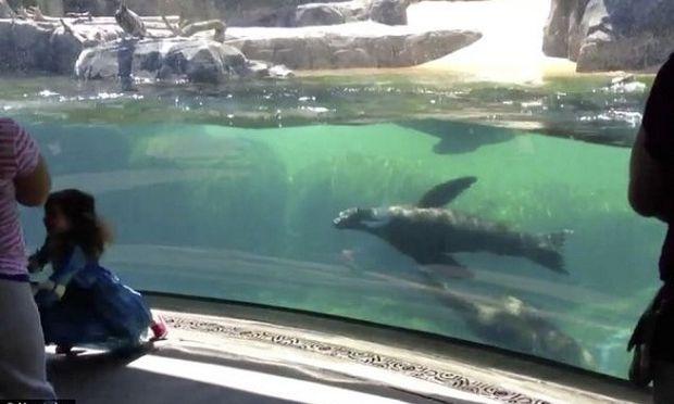 Δε θα πιστεύετε πώς αντιδρά ένα θαλάσσιο λιοντάρι όταν βλέπει ένα κοριτσάκι να πέφτει! (βίντεο)