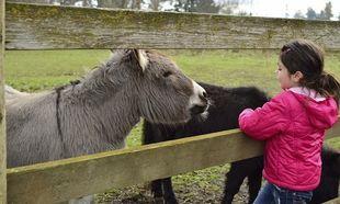 Παιδιά δεν ξέρουν να ξεχωρίζουν τα ζώα στο Ζωολογικό Κήπο! Απίστευτα περιστατικά περιγράφουν οι υπεύθυνοι