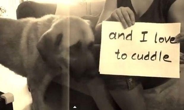 Όλα τα σκυλιά είναι ίσα (βίντεο)