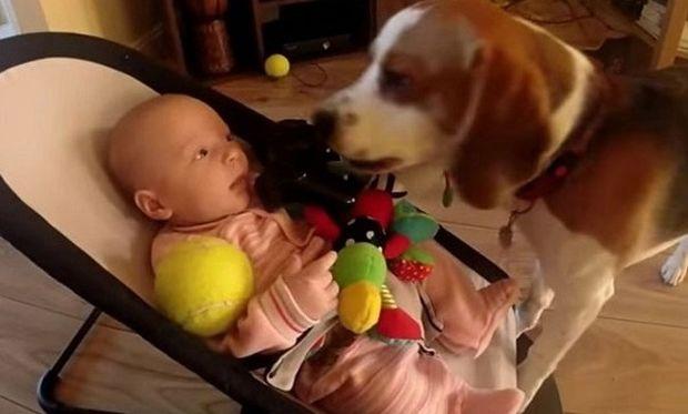 Ο σκύλος γεμάτος ενοχές ζητάει συγνώμη από το μωρό που του πήρε το παιχνίδι! (βίντεο)