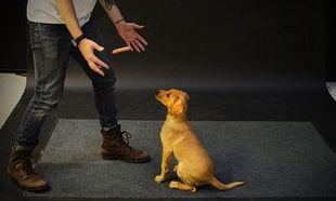 Πώς αντιδρούν οι σκύλοι όταν αιωρείται μπροστά τους ένα λουκάνικο; (βίντεο)