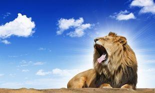 Δείτε πώς αντιδρά ένα μωρό μόλις ακούει για πρώτη φορά τον βρυχηθμό ενός λιονταριού! (βίντεο)