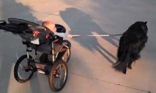 Ο σκύλος πάει βόλτα το μωρό ή το αντίθετο; Δείτε το ξεκαρδιστικό βίντεο