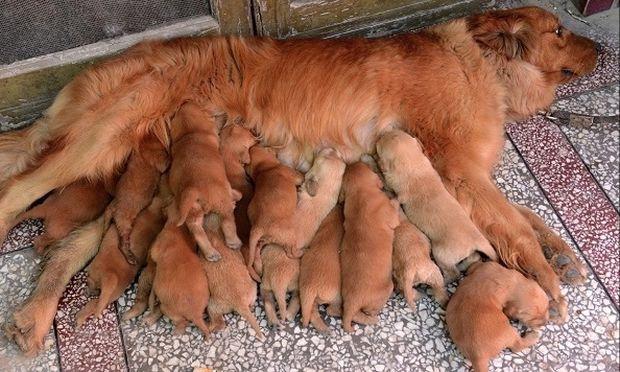 Ένα μοναδικό φωτογραφικό υλικό από 12 αξιολάτρευτες και περήφανες σκυλίτσες μανούλες!