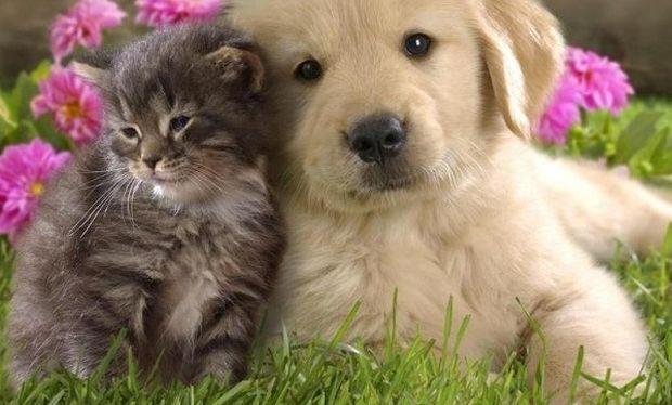 Ό,τι πιο αστείο έχετε δει: Γάτα κάνει μασάζ σε σκύλο (βίντεο)