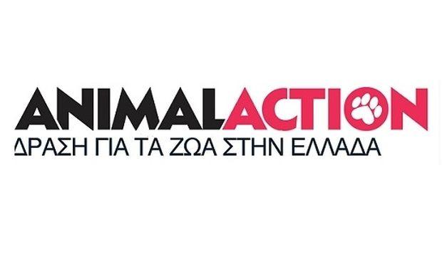 Πρόγραμμα Δωρεάν Στειρώσεων Αδέσποτων Γάτων στην Αθήνα για τα Μέλη της Animal Action!