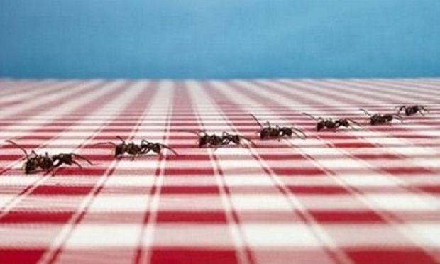 Αυτό είναι το μυστικό για να απαλλαγείτε από τα μυρμήγκια!