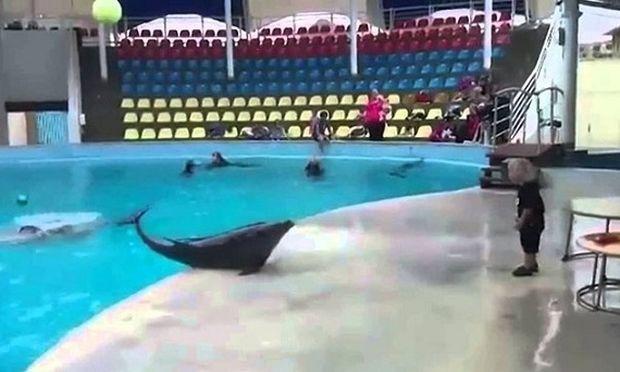 Το παιδί και το δελφίνι: Τα παιχνίδια τους «τρελαίνουν» το YouTube! (βίντεο)