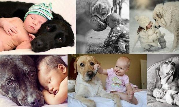 Πόσο τρυφερό: 17 μεγάλα σκυλιά γίνονται «φύλακες-άγγελοι» για τα μωράκια (εικόνες)