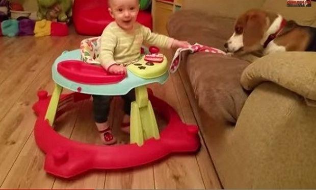 Τι γίνεται όταν ο σκύλος κλέψει την σαλιάρα του μωρού; (βίντεο)