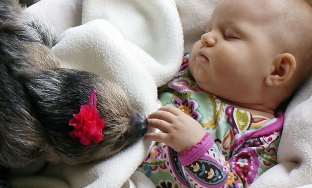 Η απίστευτη σχέση ενός μωρού με ένα…βραδύπους! (βίντεο, εικόνες)
