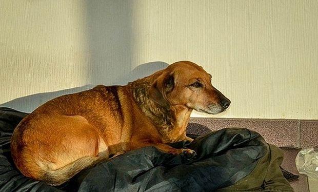 Πόσο συγκινητικό: Σκύλος περίμενε 2 χρόνια το αφεντικό του αλλά…(εικόνες)