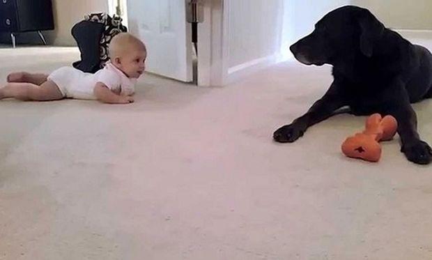 Δε θα πιστεύετε πώς αντιδρά ένας σκύλος όταν βλέπει το μωρό να μπουσουλάει για πρώτη φορά! (βίντεο)