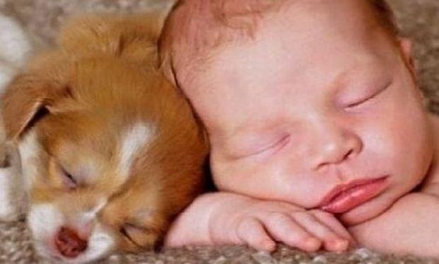 Δεν υπάρχει! Δείτε τι κάνει ένας σκύλος σε ένα μωρό όταν ακούει την ηλεκτρική σκούπα (βίντεο)