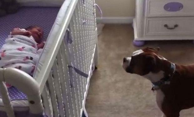 Πόσο συγκινητικό! Δείτε πώς αντιδρά ένας σκύλος όταν ακούσει  το μωρό να κλαίει (βίντεο)
