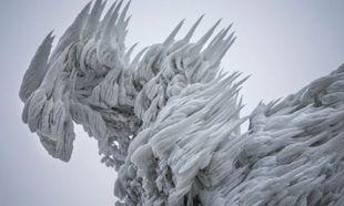 Χιονοθύελλα μετέτρεψε ένα ολόκληρο δάσος σε... γλυπτό από πάγo