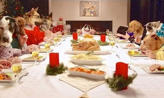 Τι κάνουν 13 σκύλοι και 1 γάτα στο γιορτινό τραπέζι; Δείτε το βίντεο που έγινε viral!
